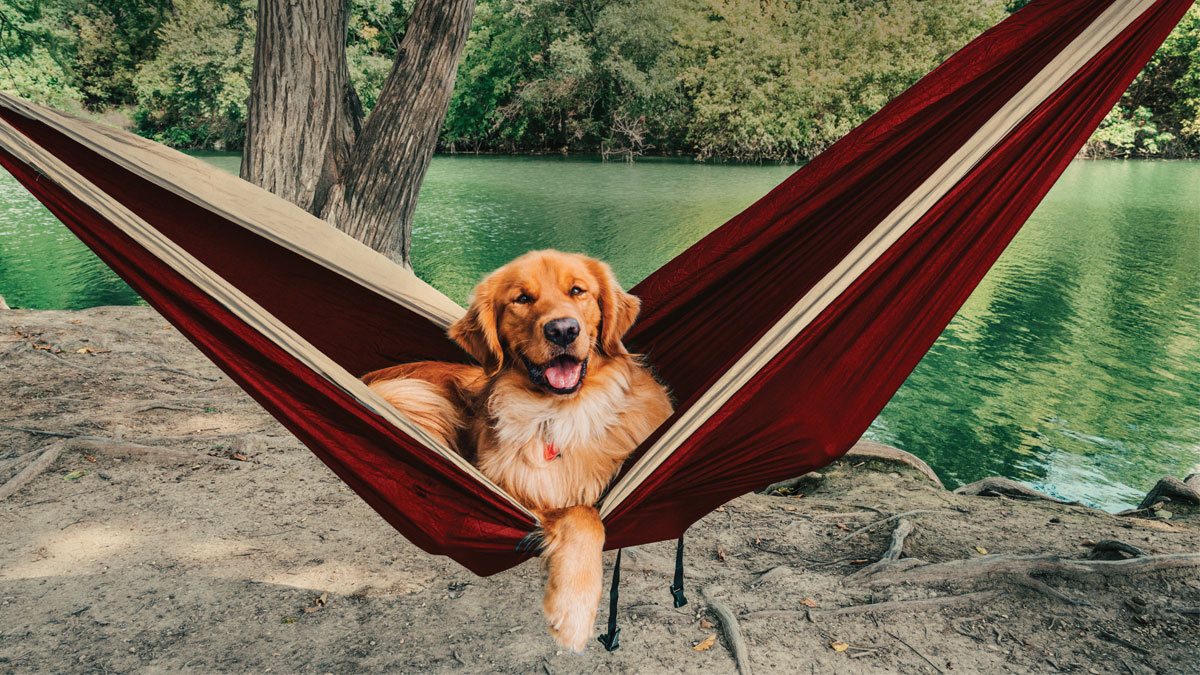 Redtail dog in the hammock
