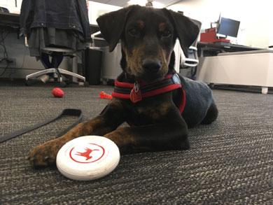 Dog name Sebastian playing with toy