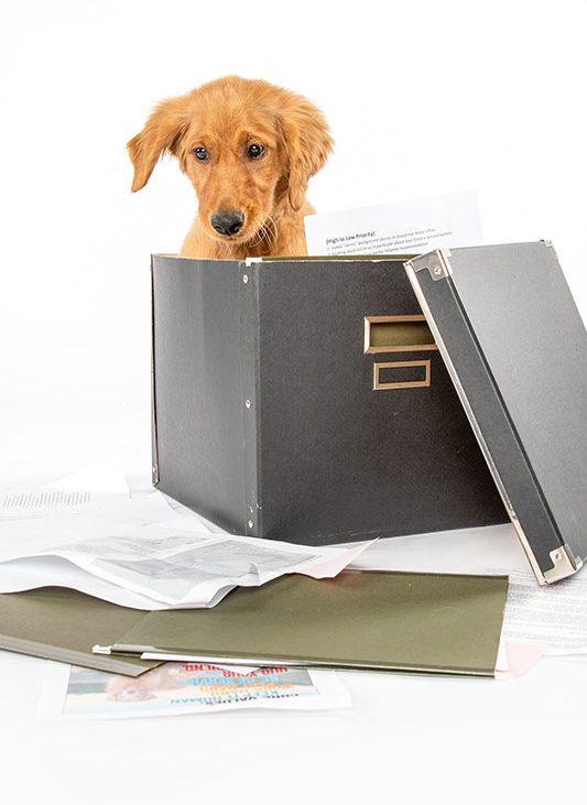Redtail dog inside file folder box